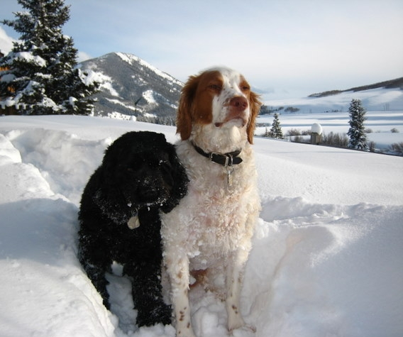 Ceilidh and Duke in deep snow