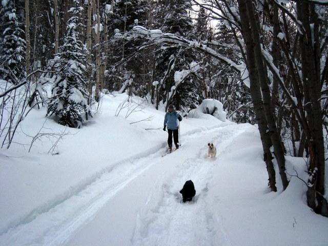 Mrs. Flyingcracker skiing with Ceilidh and Duke